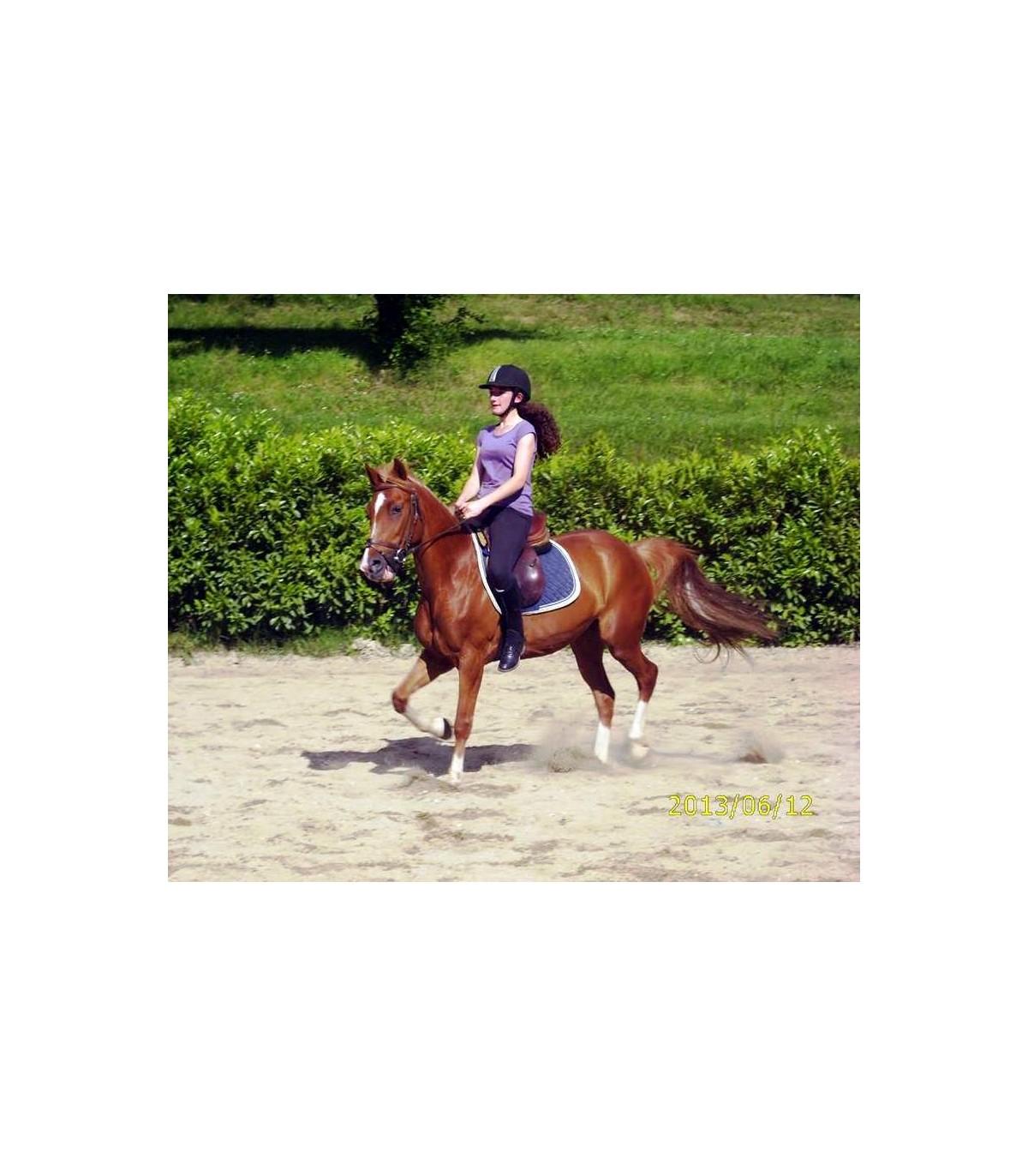poney 7 ans et plus